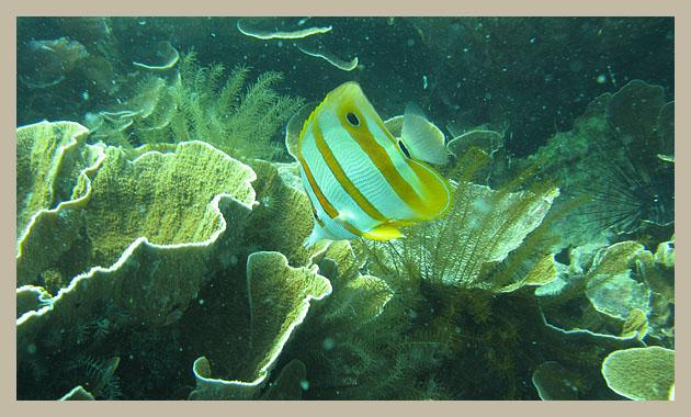 Малайзия. Тиоман. Коралловый риф. Malaysia. Tioman. 7